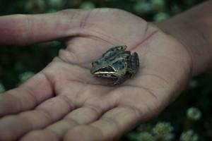 handfrog